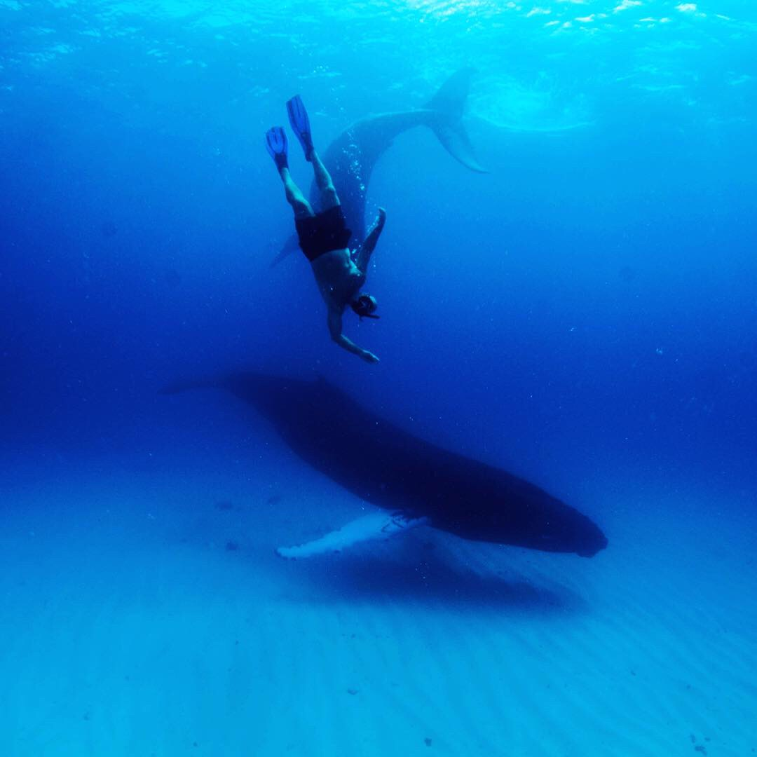 swimming with whales Turks and Caicos