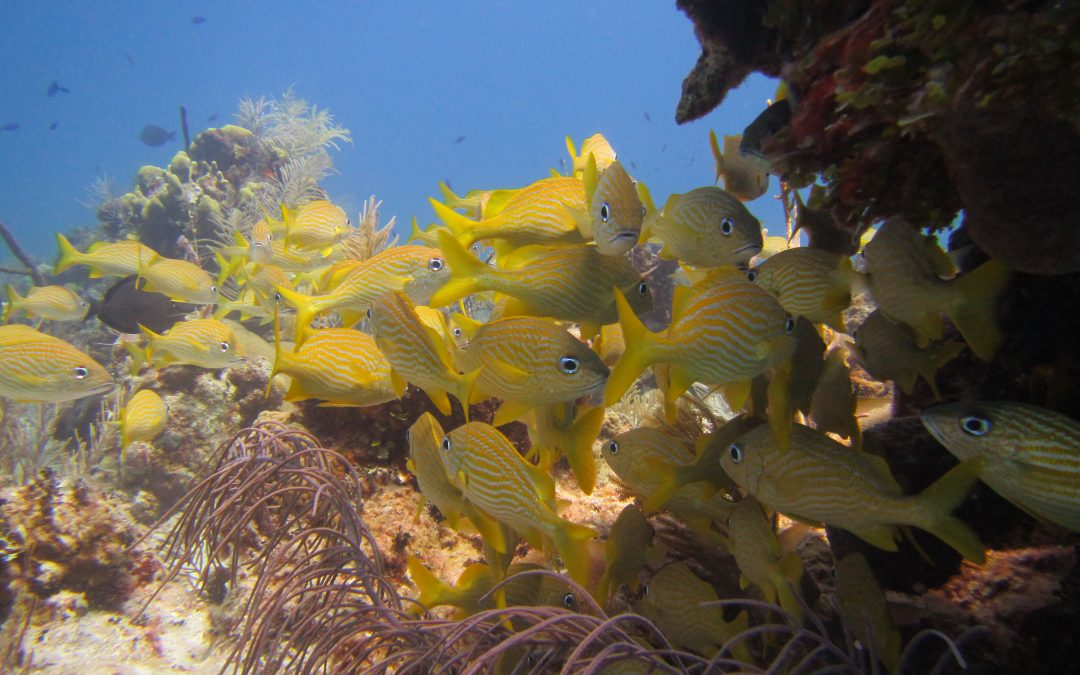 Diving in Turks and Caicos