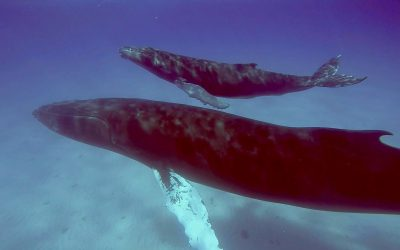 Whale Watching in Turks & Caicos