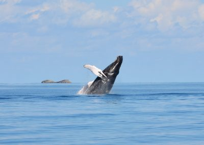 Humpback Whale Watching in the Turks & Caicos Islands